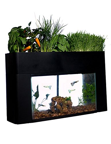 aquaponics fish tank plants