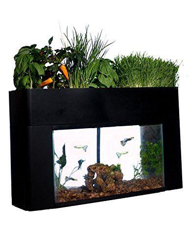 aquaponics fish tank plants