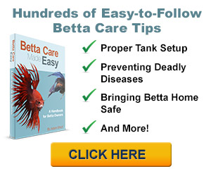 Betta Fish Center Banner 300 250