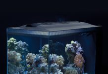 nano reef fish tank
