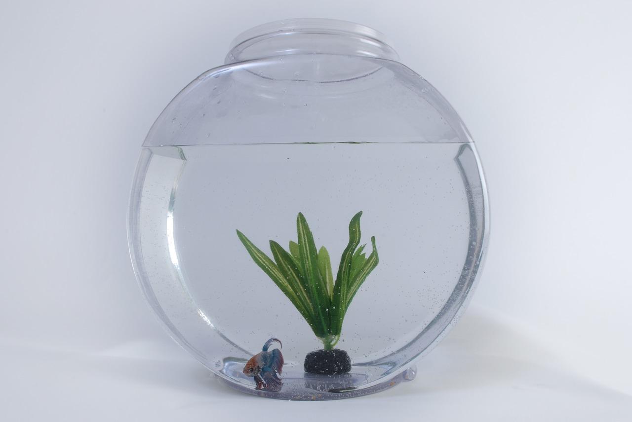 fish tank vacuum