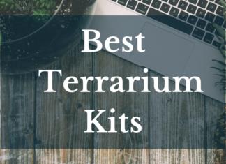 Best Terrarium Kits